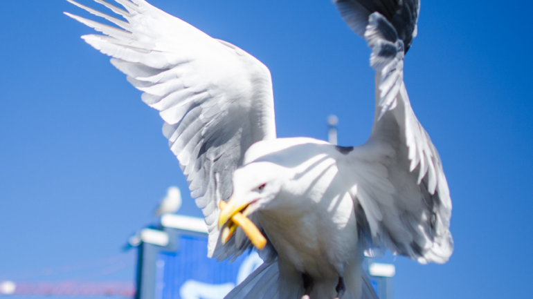 Getting Retirement Right: Happier Than A Seagull With A French Fry
